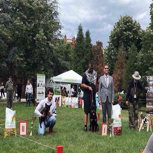 Nacionalna izložba pasa u Mladenovcu